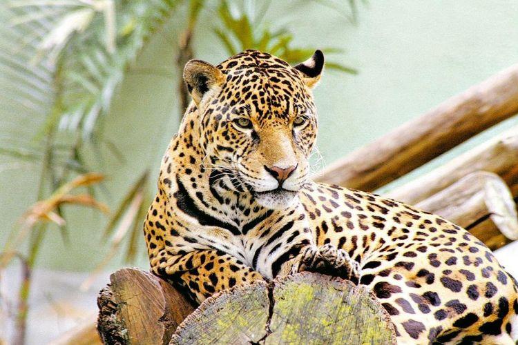 Muitas vezes Conheça alguns animais ameaçados de extinção do Cerrado - Fotos  KE33