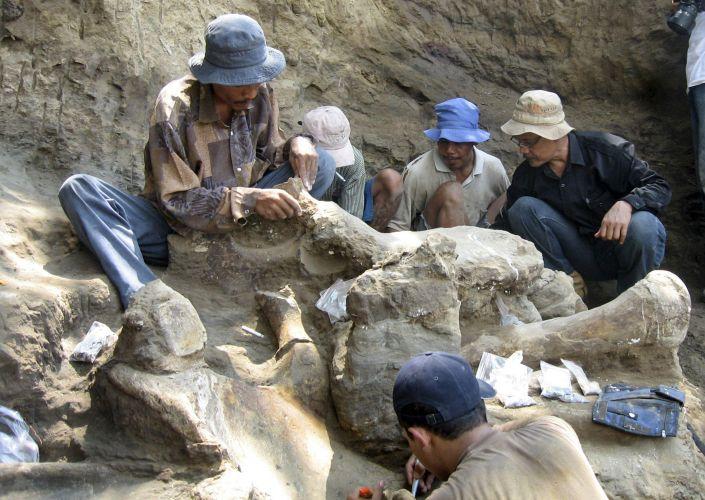 Elefante de 200 mil anos