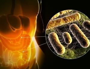 Bactérias intestinais seriam causa de  obesidade em pessoas com Síndrome Metabólica