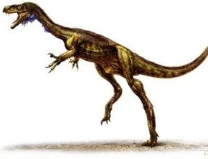 O sul americano Eodromaeus é o dinossauro carnívoro mais antigo já encontrado