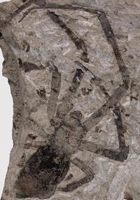 A fêmea, que viveu há cerca de 165 milhões de anos, faz parte do gênero Nephila e tem 15 cm