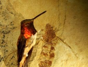 Restos fossilizados de uma das maiores espécies de formiga que já habitaram a Terra
