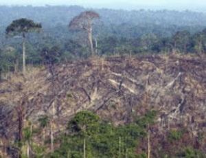 Para jornal, 'progresso em reduzir desmatamento é ofuscado por assassinatos brutais'