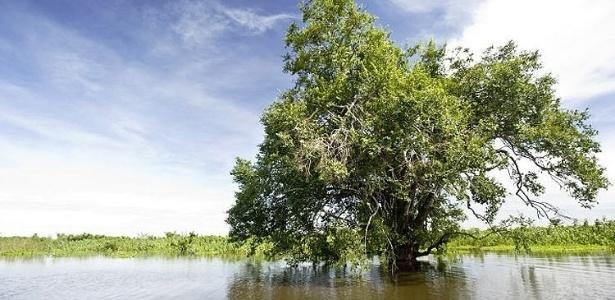 O Pantanal está ameaçado pela agricultura intensiva e pelo desmatamento; veja fotos