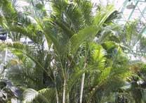Cortesia Shu Suehiro -  http://www.botanic.jp
