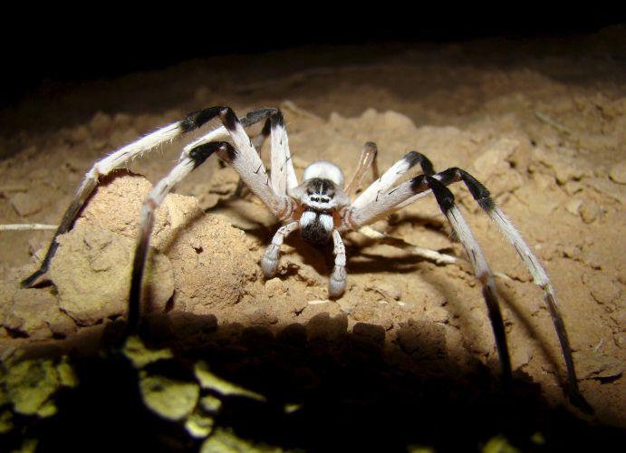 Nova aranha
