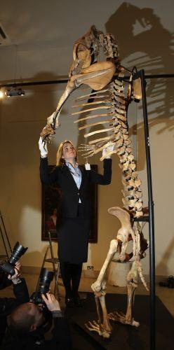 Esqueleto da era do gelo