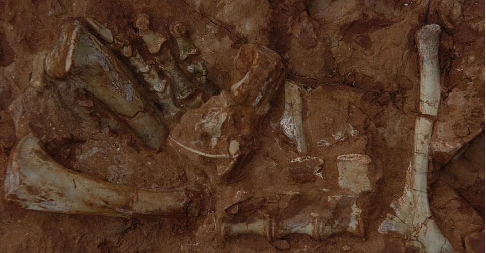 Descobertos fósseis de dinossauro no RS
