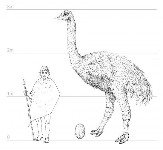 DNA de pássaro extinto 2