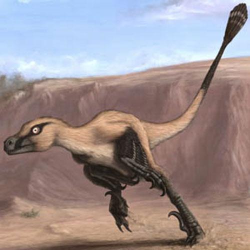 Nova espécie de dinossauro carnívoro