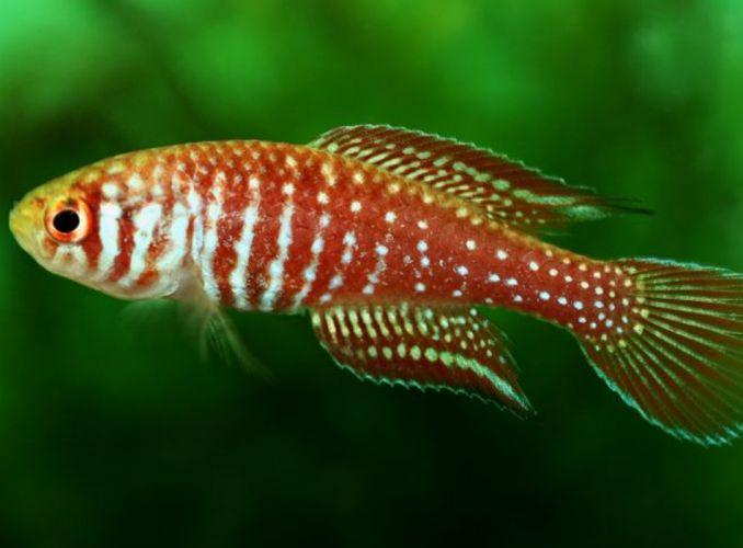 Peixes raros