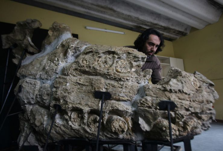 Fósseis de deserto peruano 1