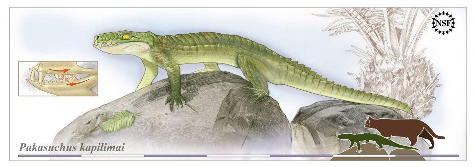 Ancestral de crocodilo 1