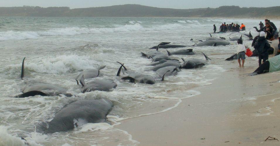 Baleias morrem encalhadas na Nova Zelândia
