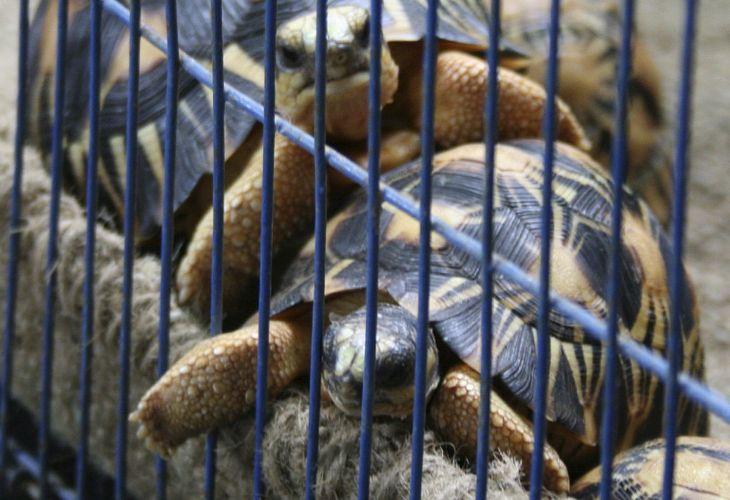 Tartarugas escondidas em aeroporto