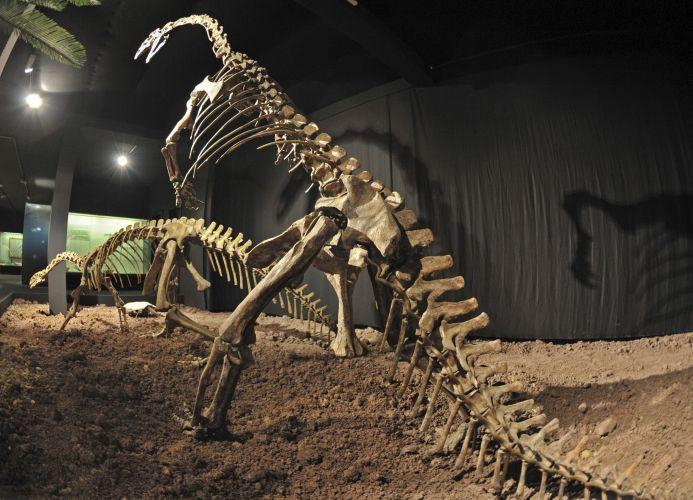 Plateossauros expostos na Alemanha