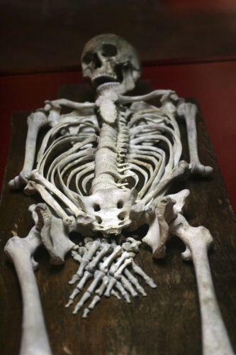 Equeleto em exposição na Tunísia