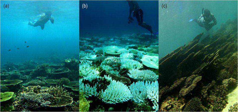 Recife de corais morrendo na Ásia