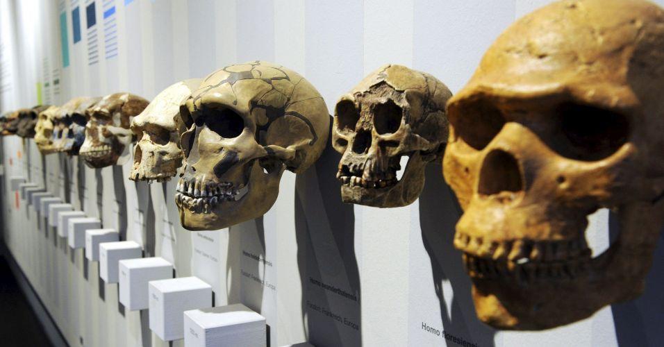 Exposição sobre evolução humana