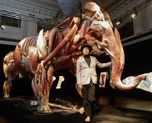 Exposição de anatomia