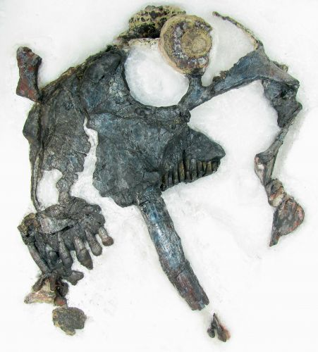 Dinossauro gaúcho 1