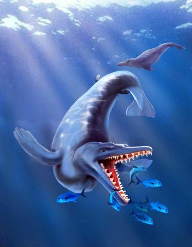 Fóssil de baleia 2
