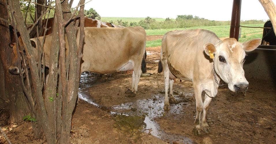 Novas regras para produção de leite