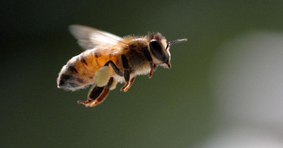 Personalidade das abelhas