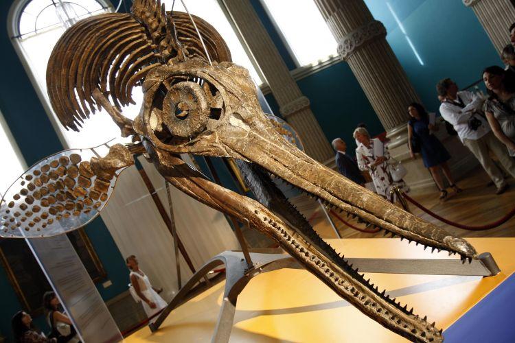 Réptil gigante