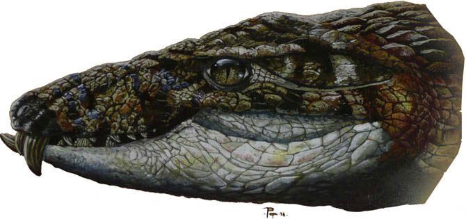 Crocodilo-tatu
