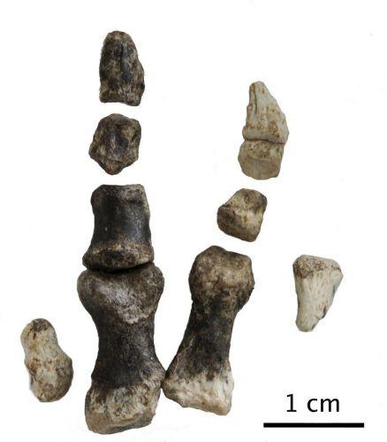 Dinossauro chinês 2