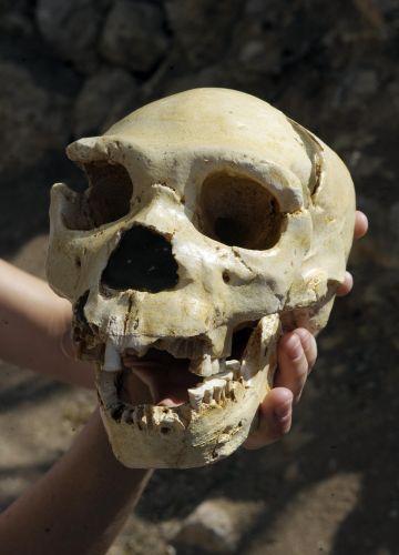 Caveira de <i>Homo heidelbergensis</i