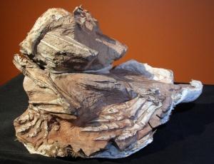 Esqueleto parcial fossilizado de uma nova espécie de dinossauro herbívoro, que viveu há 185 milhões de anos; veja no álbum do mês