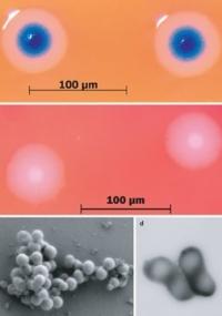 Célula sintética é composta de cromossomo feito pelo homem injetado em uma célula natural