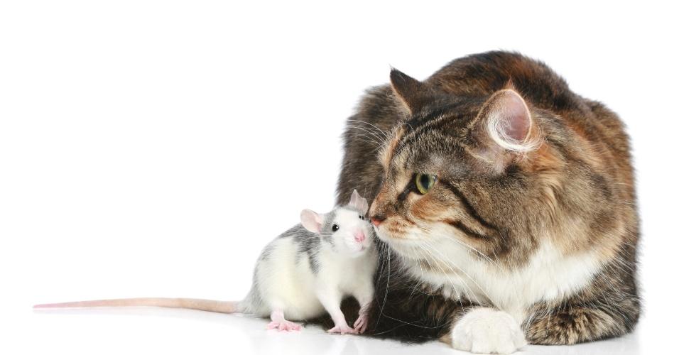 Rato e gato juntos